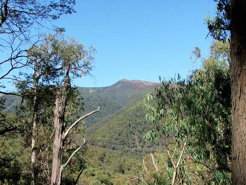 Mt. Buller Backdrop