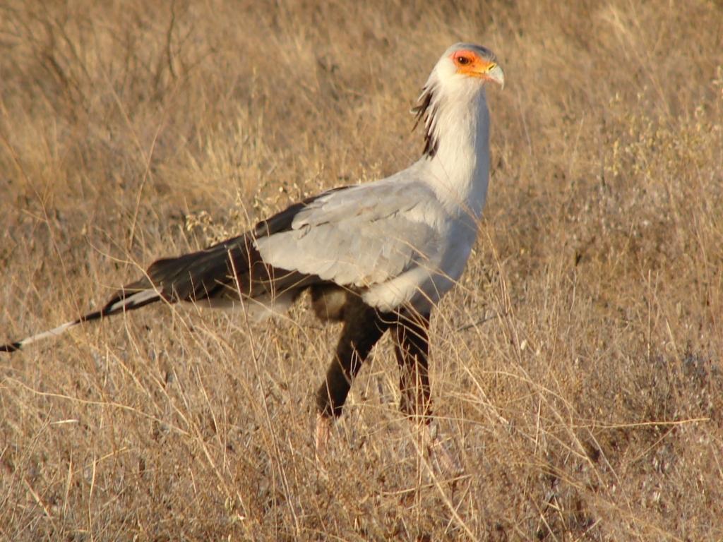 Birds - Buffalo Springs / Samburu Game Reserve