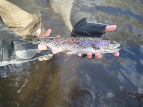 December fly fishing