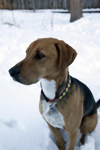 Snow Dog Grifter