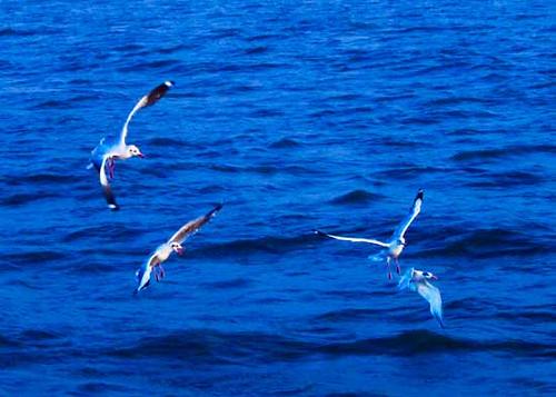 sea gulls..i guess