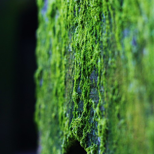 Texture in Green