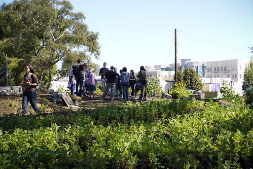 Hayes Valley Farm, free workshop