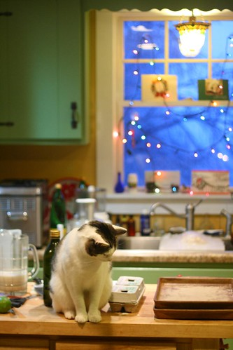 Cat on the counter