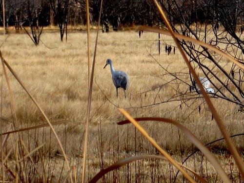 spying the crane through the grass