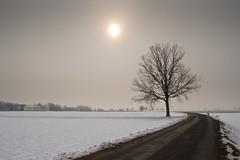 L'armonia dell'ultima neve... (Scaldasole, Pro...