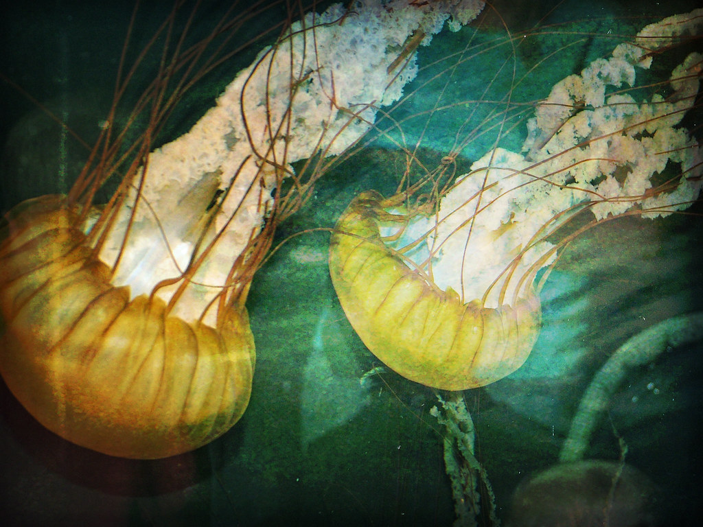 jellyfish 2 texture