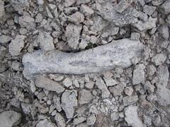 Fossil Bone
