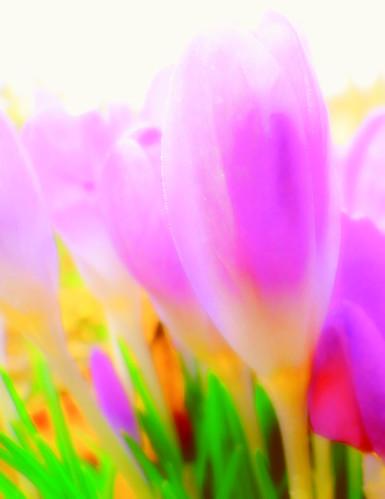 Spring colour 1 by Pjotre7