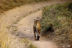 Machli walks... by Aanand L Ratan