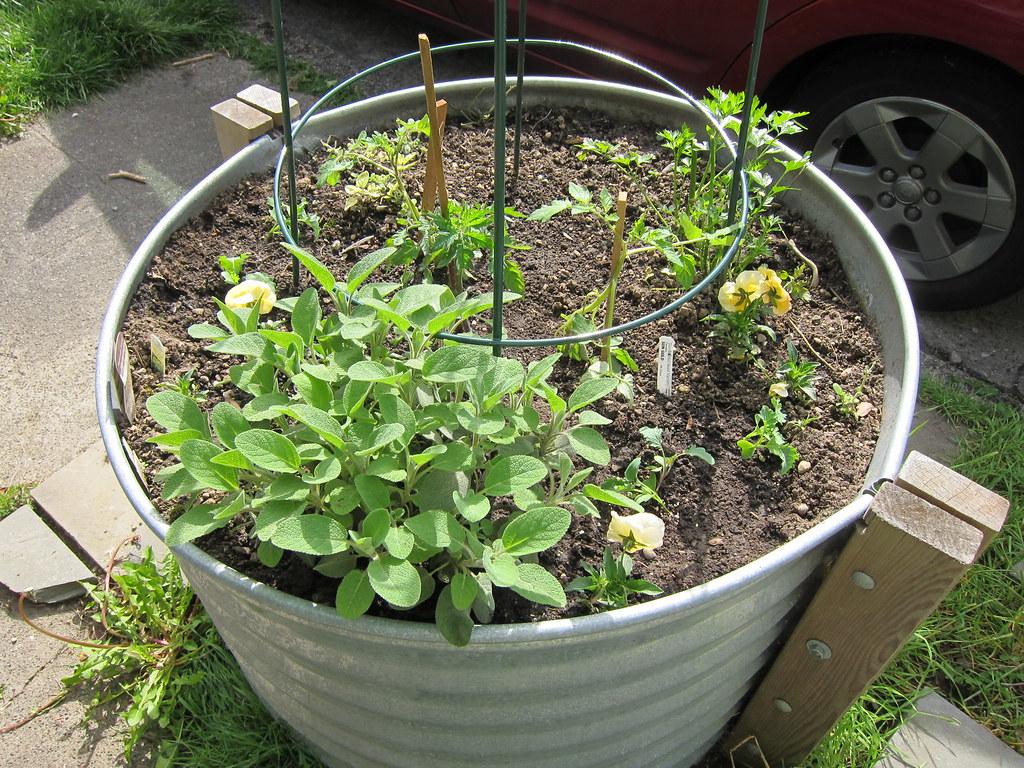 Round stock tank herb garden