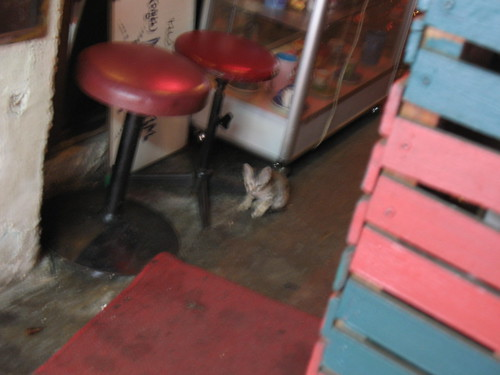 kitten in a go-go bar