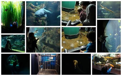 At the Tennessee Aquarium