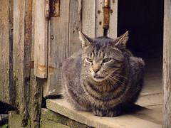 (Evil) cat