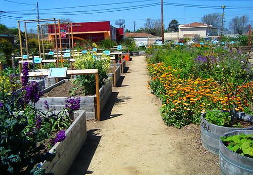 Salinas Chinatown Community Gardens 1