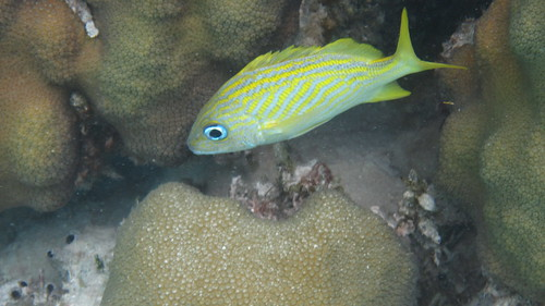 Belize Snorkel Trip
