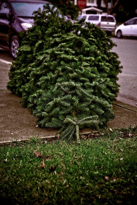 January 5, 2010 - Goodbye Christmas