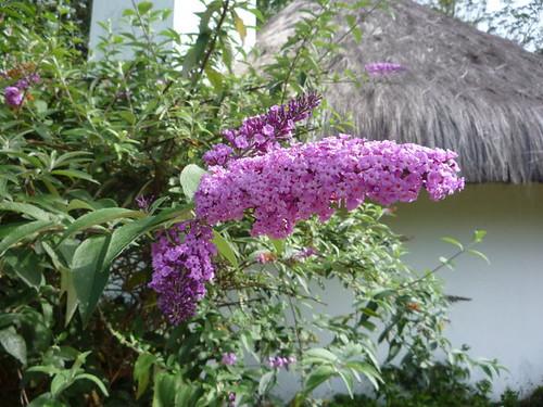 Flores y MilSabores