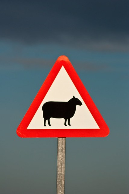 Warning Sheep!