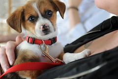 An Adorable Puppy