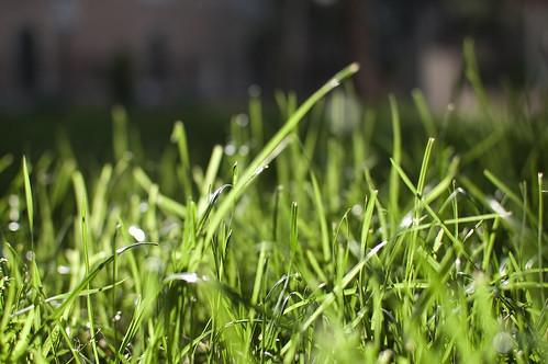 Luz + sol + calor = primavera