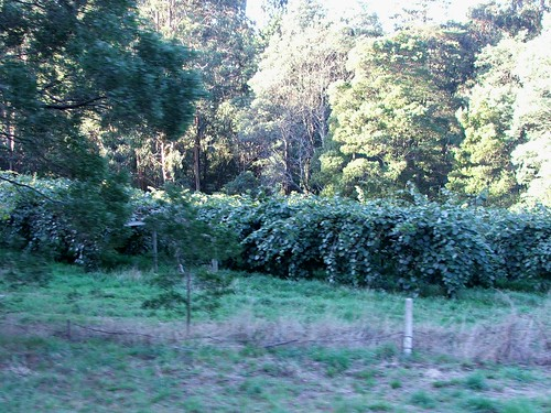 Dandenong Ranges Vineyard