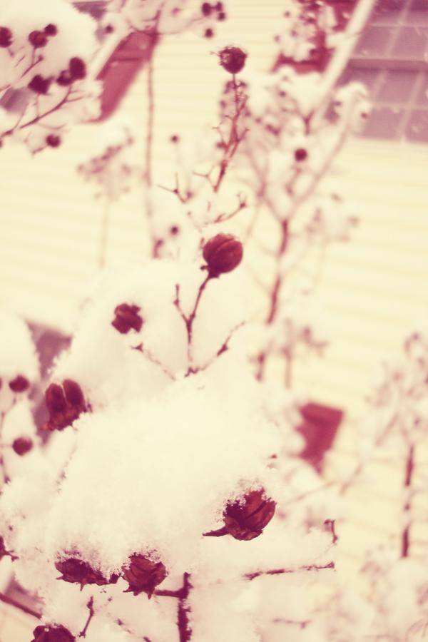 02-05 more snow