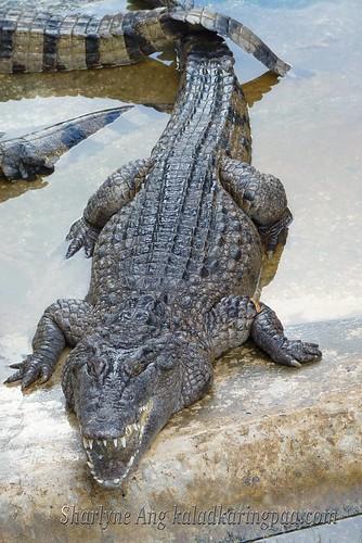 Crocodile Farm in Puerto Princesa