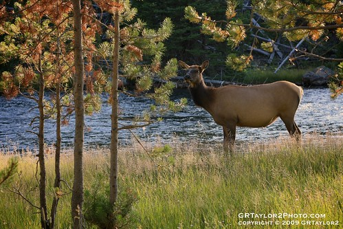 Stabilization : Yellowstone National Park, MT