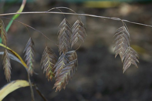 seedhead3
