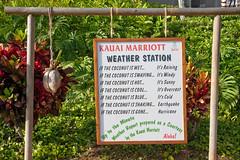 Coconut Weather Station - Hawaiian Humor