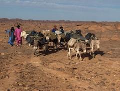 algérie 050