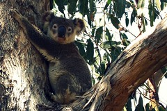 Pearson to sell Kobo ebooks in Australia eBookstore