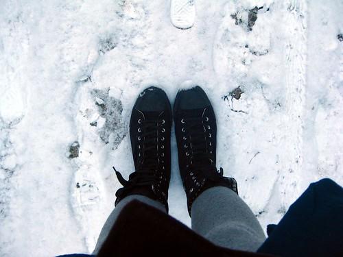 kojos. sniegas.