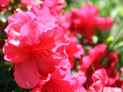 25 April Flowers 02