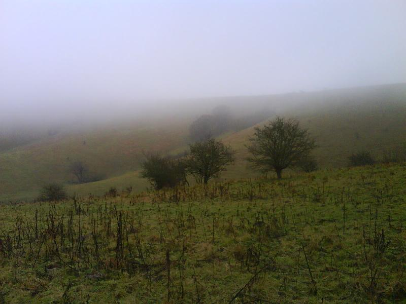 Downland at Firle Plantation shrouded in mist