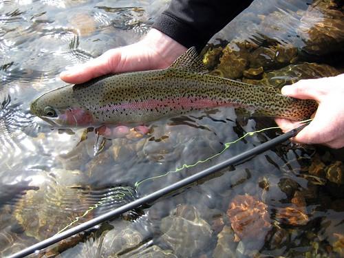 wild mckenzie river rainbow 2