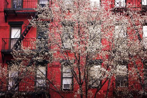 Blooming 58/365