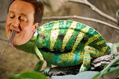 David Cameron - David Chameleon