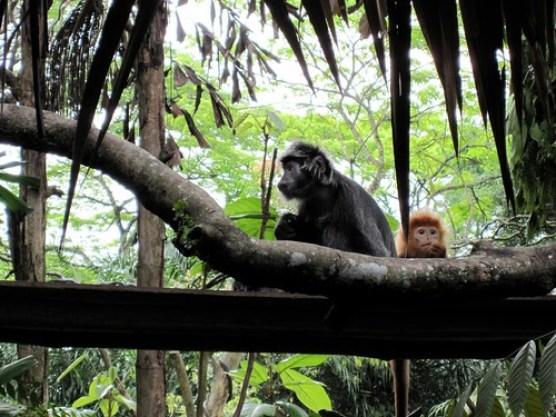 Monkeys 2