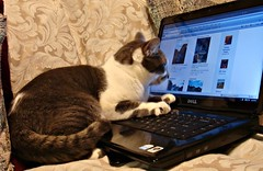 cat, cat sleeping, cuddly cat, cute cat, tabby cat, playful, keyboard, computer,