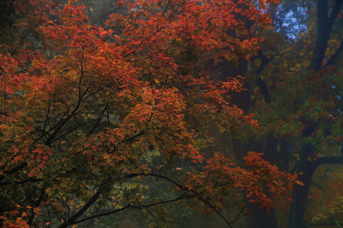 Branches of Autumn