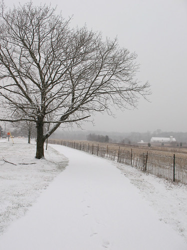Snowy Tree And Path