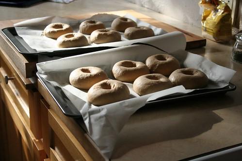 Bagels, resting