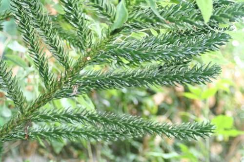 20090919 Edinburgh 20 Royal Botanic Garden 076