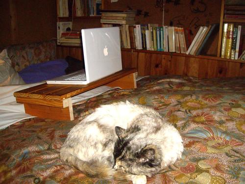 MacBook chat et bureau d'hiver
