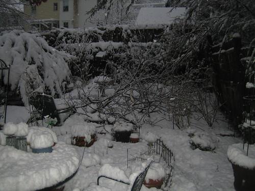2010 Feb 25 002