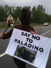 Horny horse protest of Carl Paladino