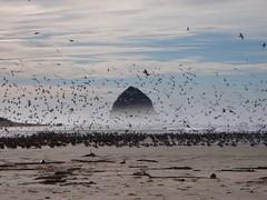 Haystack and birds
