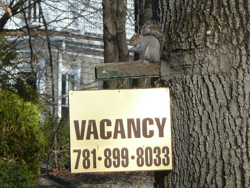 Apartment for rent...with squirrel